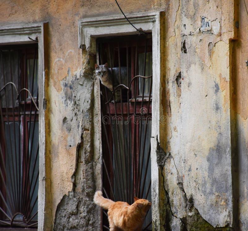 Czerwony kota A kot na ulicie obraz stock