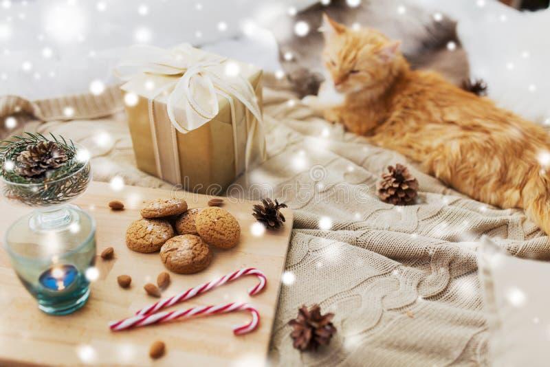 Czerwony kota lying on the beach w łóżku z boże narodzenie prezentem w domu obraz stock