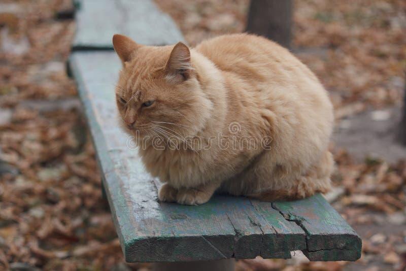 Czerwony kota obsiadanie na ławce obrazy stock
