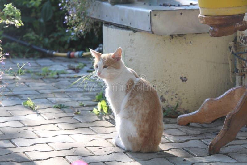 Czerwony kota obsiadanie przy dobrze zdjęcia stock