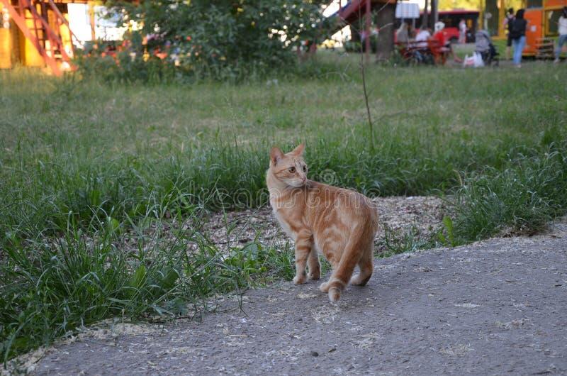 Czerwony kota zdziwienie w trawie zdjęcie royalty free