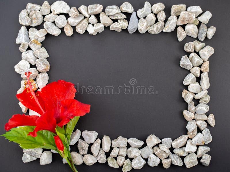 Czerwony kwiat i biel kamieni rama na czarnym tle fotografia royalty free