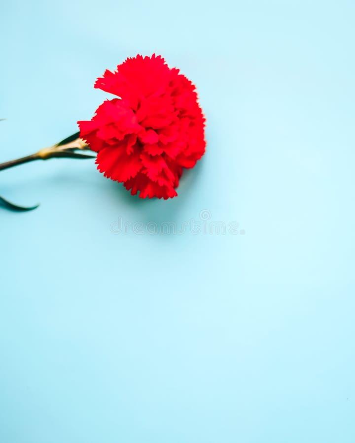 Czerwony kwiat na błękitnym tle fotografia royalty free
