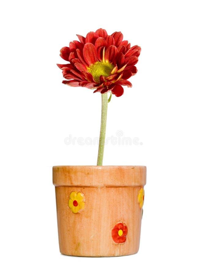 czerwony kwiat puli ceramiczne fotografia stock