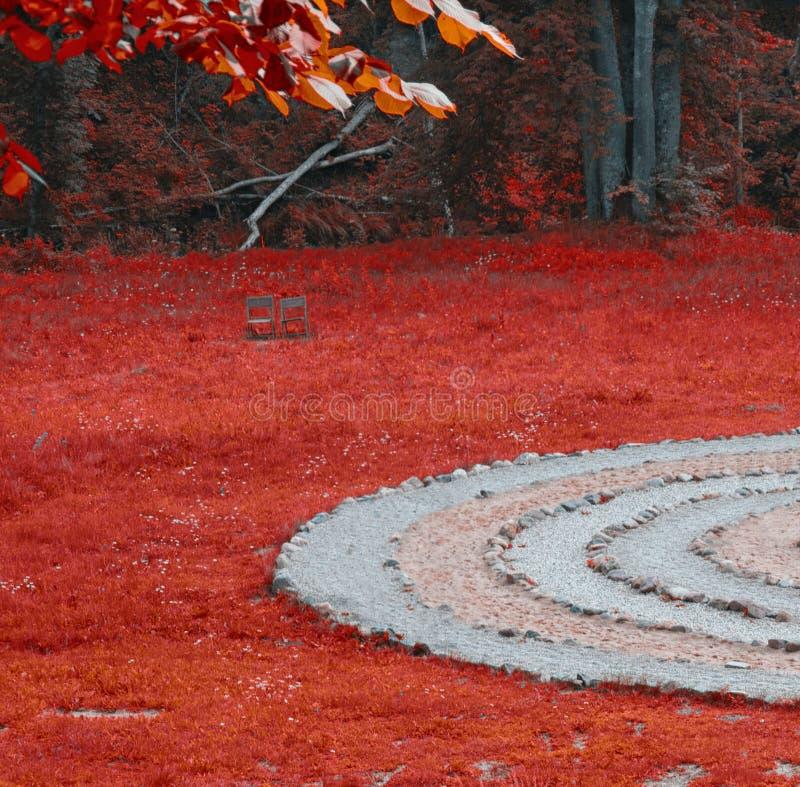 Czerwony las zdjęcie royalty free