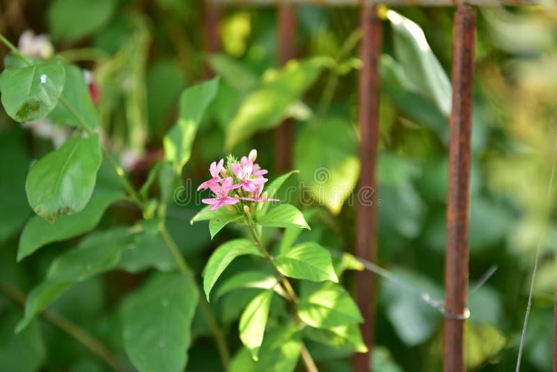 Czerwony mały kwiat i drzewo przy zmierzchem obraz royalty free