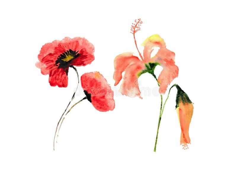 Czerwony maczek i poślubnik kwitniemy na białym tle, kwiecista sztuka ilustracja wektor