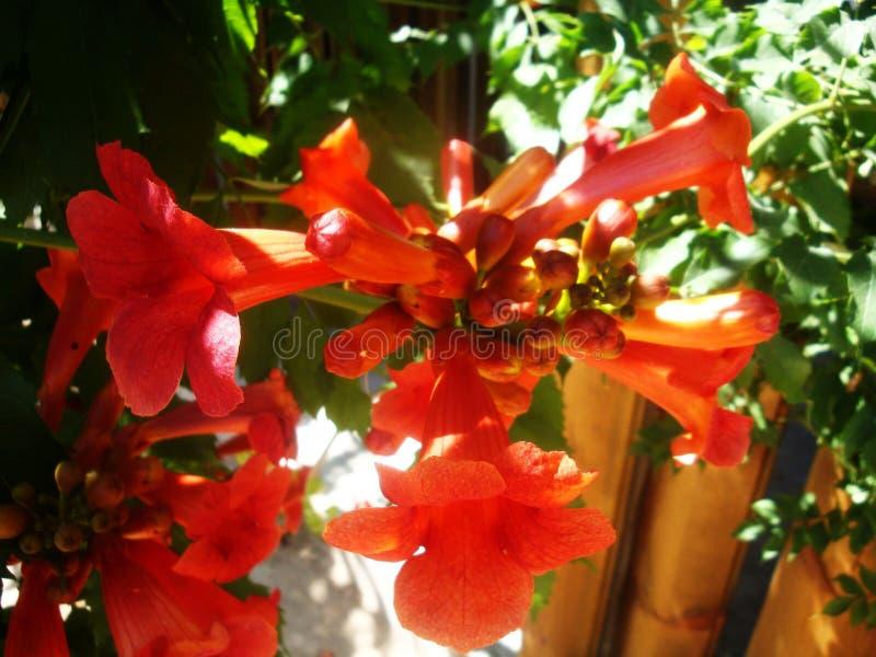 Czerwony mięsisty kwiatu dorośnięcie na drzewie w dzikim fotografia royalty free