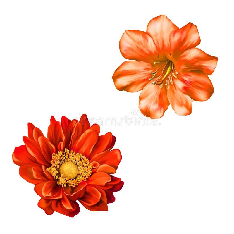 czerwony Mona Lisa kwiat, wiosna kwiat ilustracji