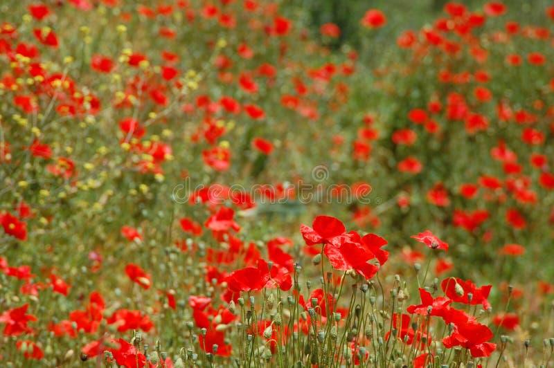 czerwony morze fotografia royalty free