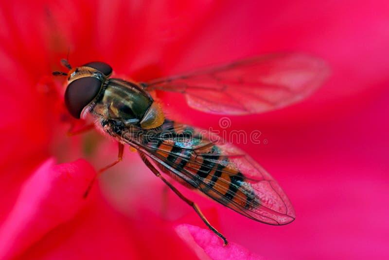 Download Czerwony muchy zdjęcie stock. Obraz złożonej z czerwień - 135530