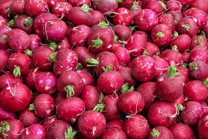 Czerwony naturalny organicznie rzodkwi tło zdjęcie royalty free