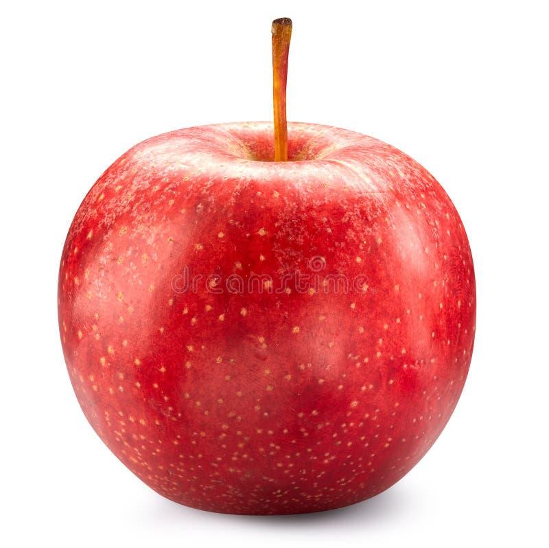 czerwony odosobnione white jabłko obraz royalty free