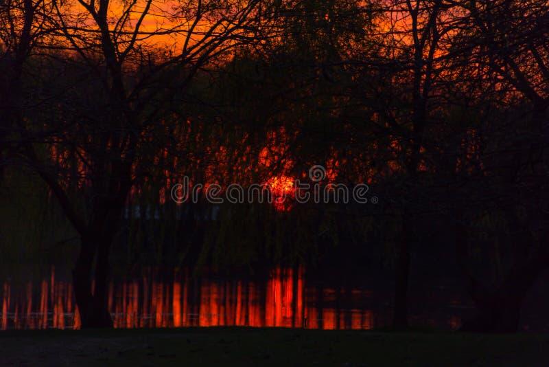 Czerwony ognisty zmierzch na malarskim krajobrazie z drzewami które odbijają w rzece pod bezbrzeżnym czerwonym wieczór niebem zdjęcia royalty free