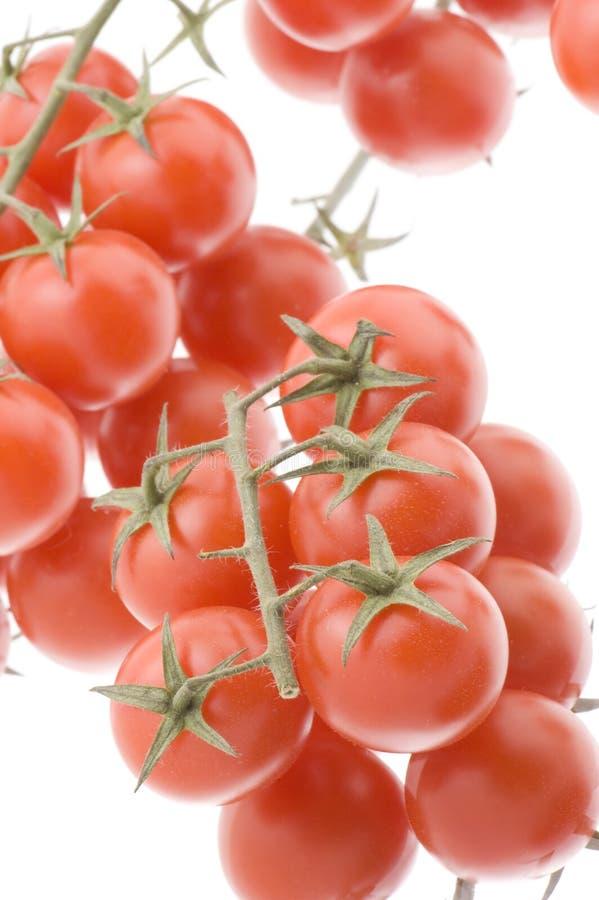 czerwony pomidorowy biel obraz stock