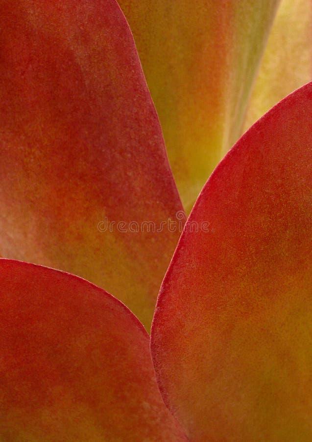 czerwony roślin zdjęcie stock