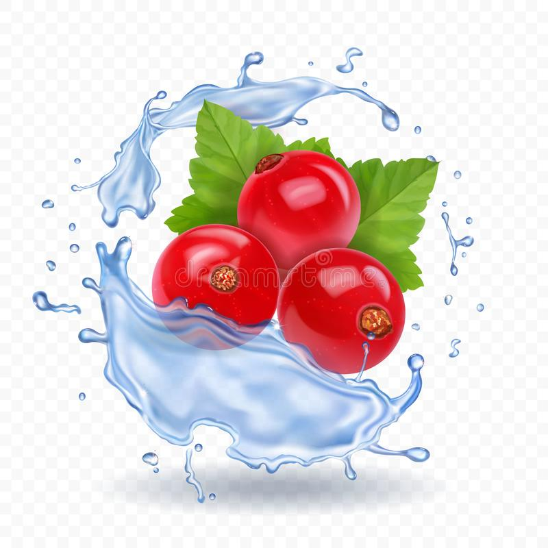 Czerwony rodzynek odizolowywający w wodnego pluśnięcia realistycznej jagodowej ikonie royalty ilustracja