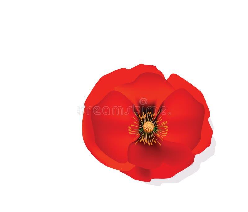 Czerwony Romantyczny makowy kwiat ilustracji