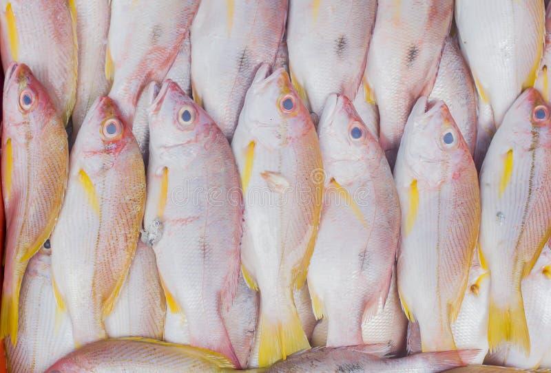 Czerwony snapper świeża ryba przy rynkiem zdjęcie stock