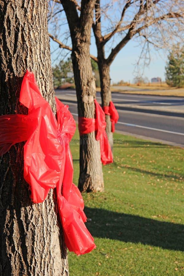 Czerwony Tasiemkowy tygodnia przyrzeczenie Mówić Nie leki obraz royalty free