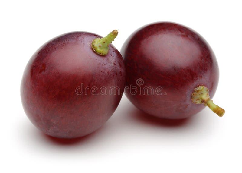 Czerwony winogrono obraz stock