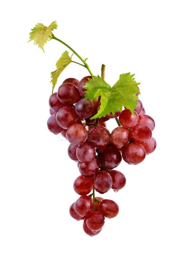Czerwony winogrono z liściem zdjęcie royalty free