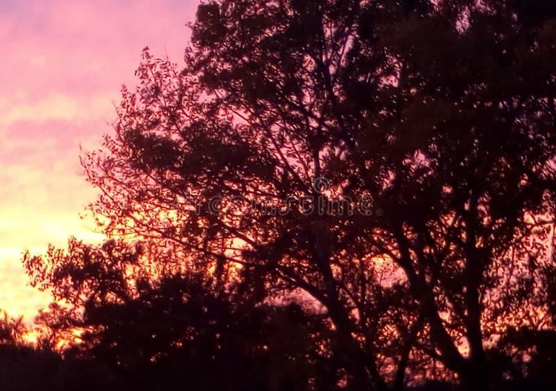 czerwony zachód słońca Czarni drzewa przeciw płonie niebu zdjęcie royalty free