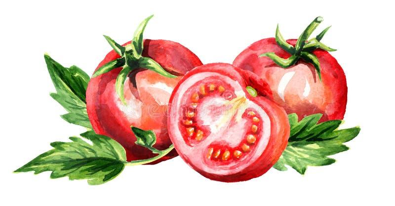 Czerwonych dojrzałych pomidorów horyzontalny skład Akwareli ręka rysująca ilustracja, odizolowywająca na białym tle ilustracji