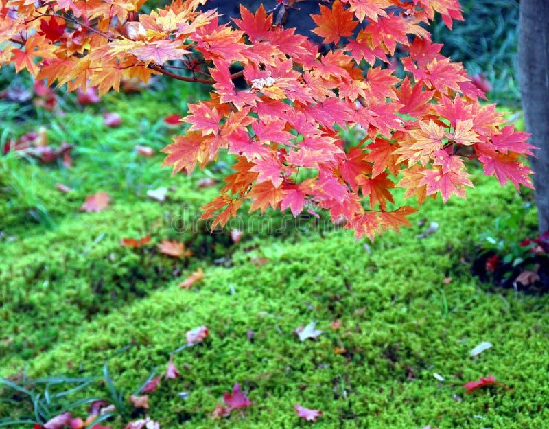 Czerwonych liści zielony mech fotografia royalty free