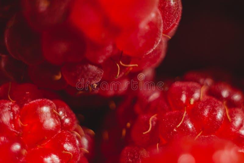 Czerwonych malinek owoc zdjęcie royalty free