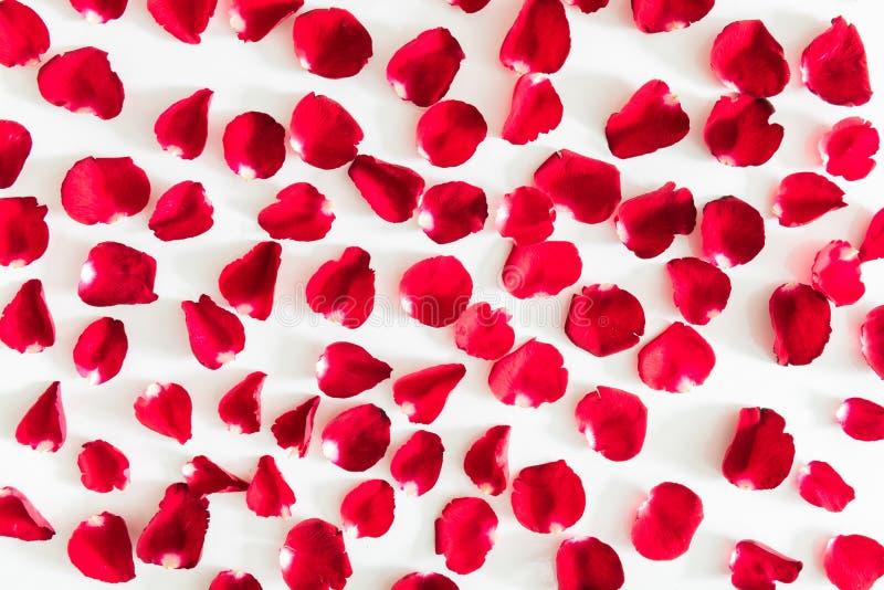 Czerwonych róż płatków walentynki dzień obrazy royalty free