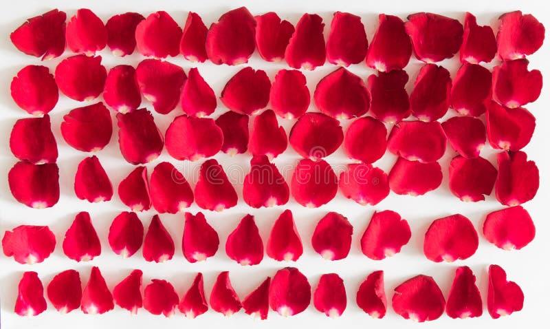 Czerwonych róż płatków walentynki dzień zdjęcie stock