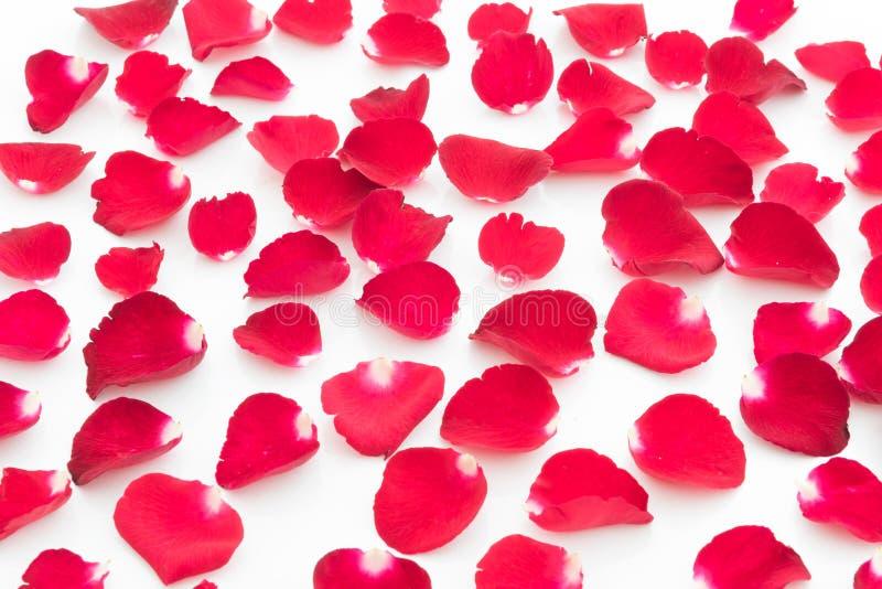 Czerwonych róż płatków walentynki dzień obrazy stock