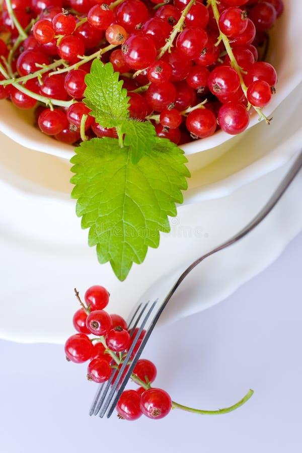Czerwonych rodzynków jagody w białym pucharze zdjęcie royalty free