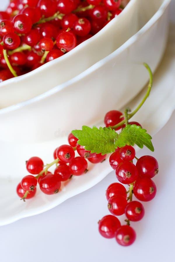 Czerwonych rodzynków jagody w białym pucharze fotografia stock