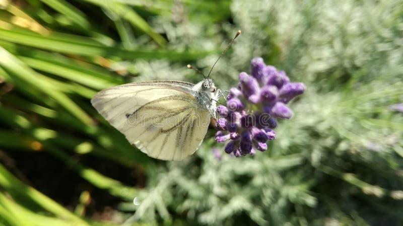 czeski zwierzęcy kwiat bardzo ładny obrazy stock