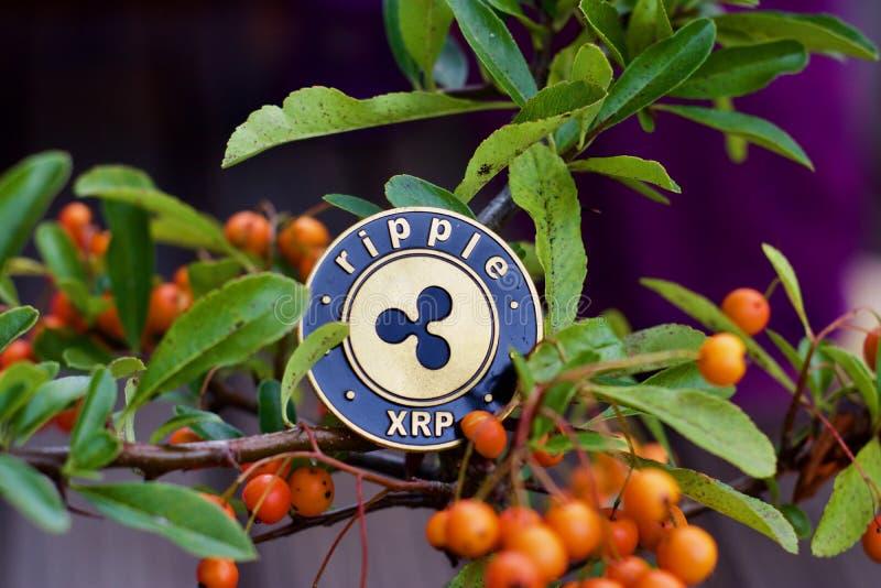 Czochry moneta na drzewie zdjęcie royalty free