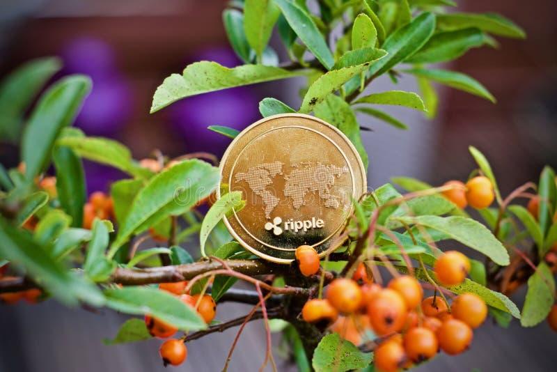 Czochry moneta na drzewie obraz royalty free