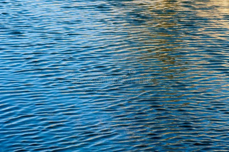 Czochry na wody powierzchni zdjęcia royalty free