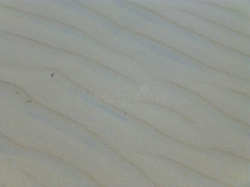 Czochry w piasku zdjęcia stock