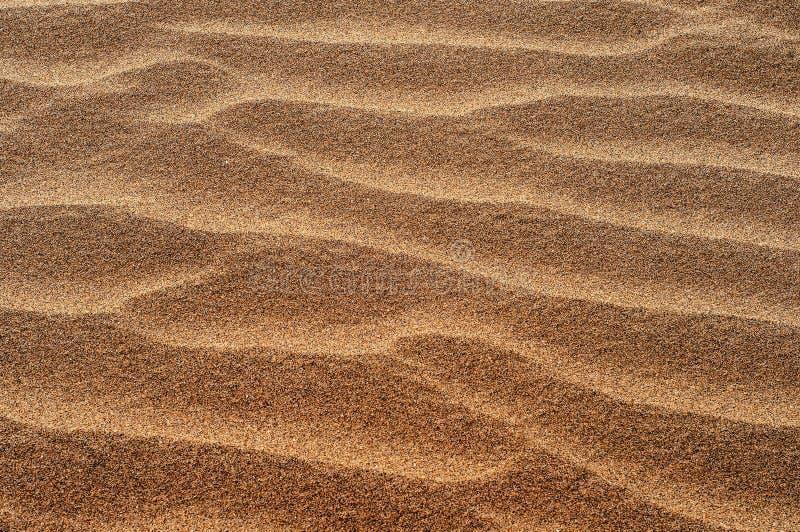 Czochry w pustynnym piasku fotografia royalty free
