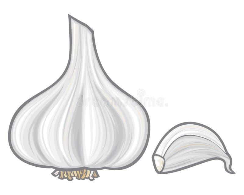 Czosnek royalty ilustracja