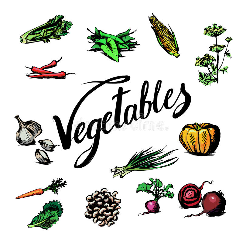 Czosnek, marchewki, kukurudza, cebula, bania, sałata, koper, Siauliai, royalty ilustracja