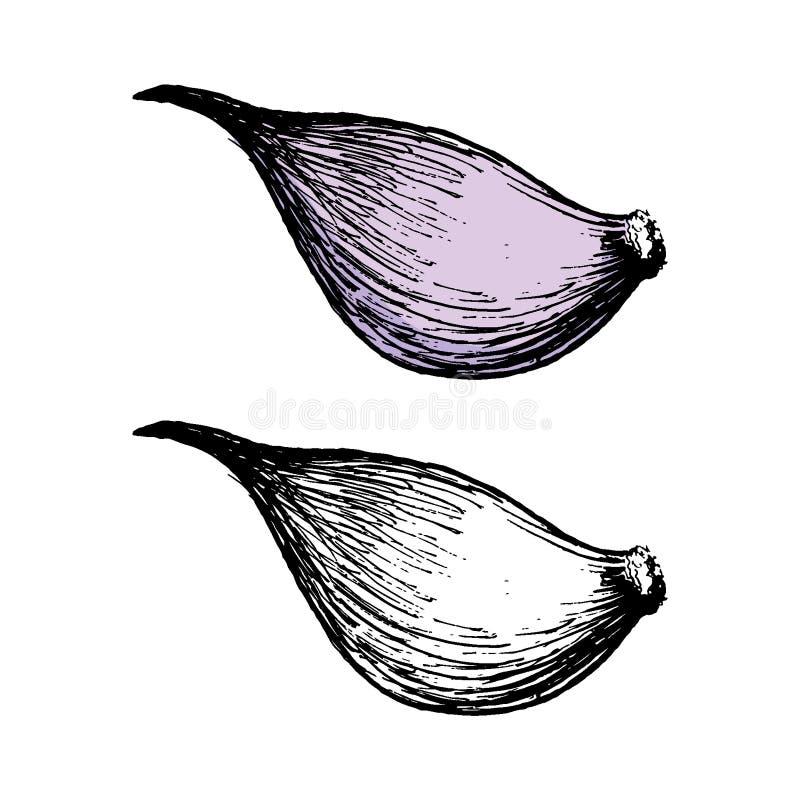 Czosnek zmiany kolorystyka barwi nawracającego rysującego skutka ręki ilustracyjnego pastel przygotowywającego wektory Pastelowy  ilustracji