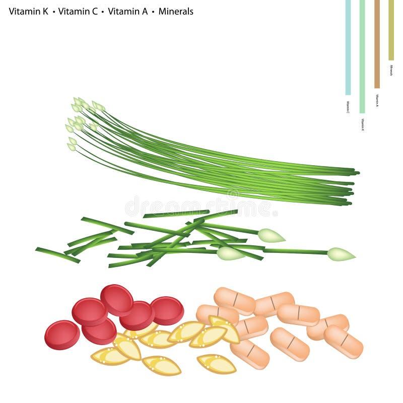 Czosnków szczypiorki z witaminą K, C, A, B9 i kopaliny, royalty ilustracja
