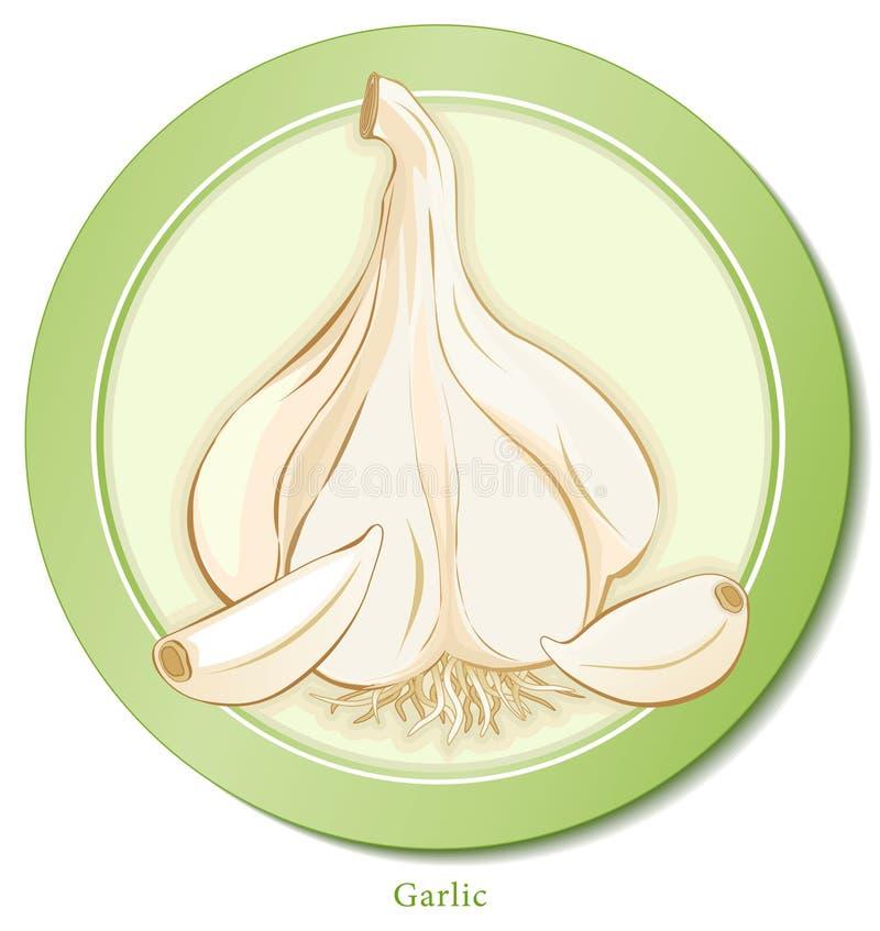 czosnku ziele royalty ilustracja