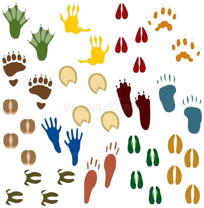 czternaście zwierzęcia zestawów ślady