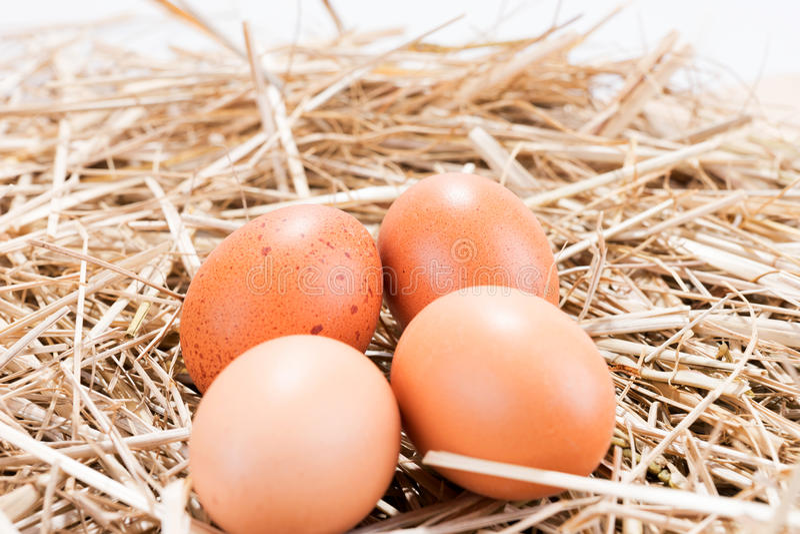 Cztery brown kurczaka jajka w słomie zdjęcie stock