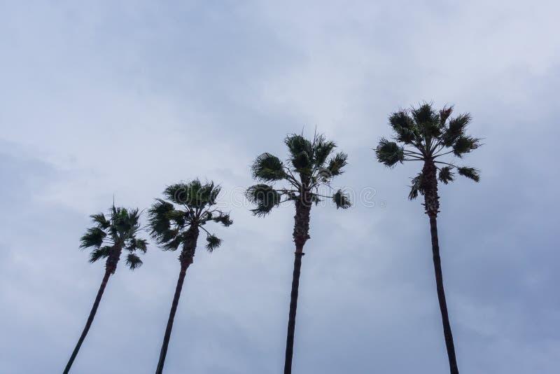 Cztery drzewka palmowego na chmurzącym nieba tle, Kalifornia obrazy royalty free