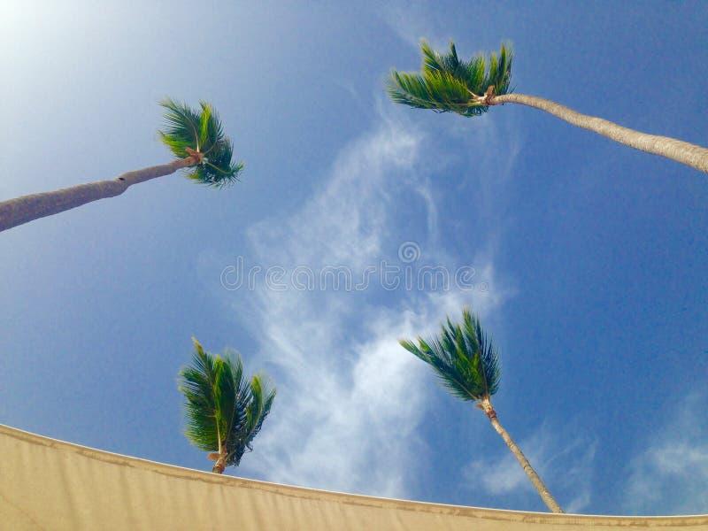 Cztery drzewka palmowego w niebie zdjęcia royalty free